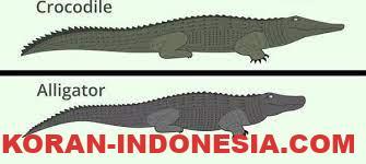 Perbedaan Antara Alligator Dan Crocodile