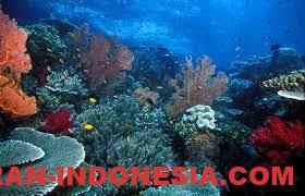 Taman Laut Selat Pantar